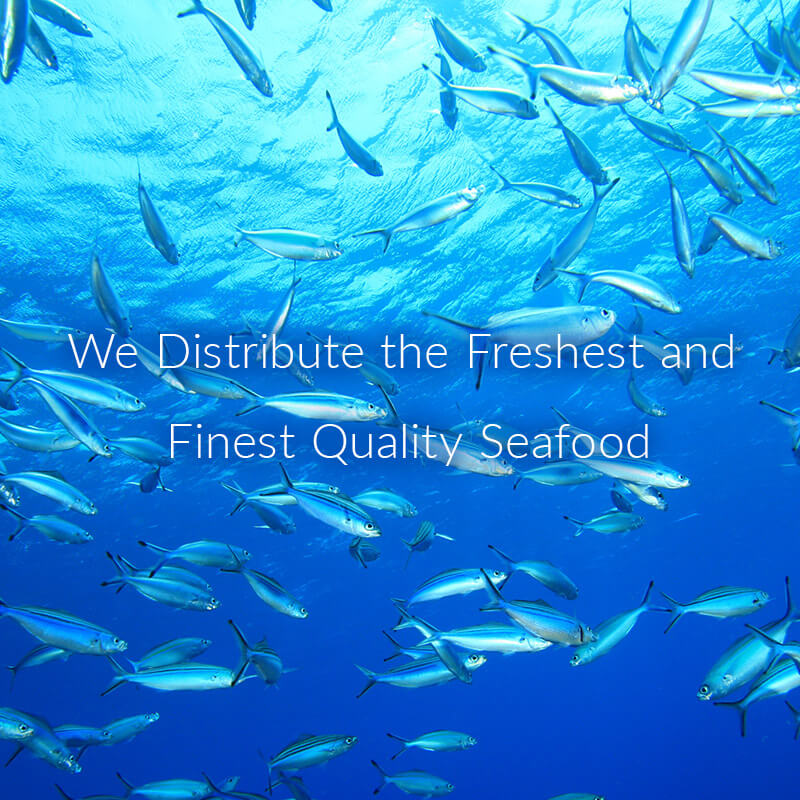 We Distribute the Freshest and Finest Quality Seafood